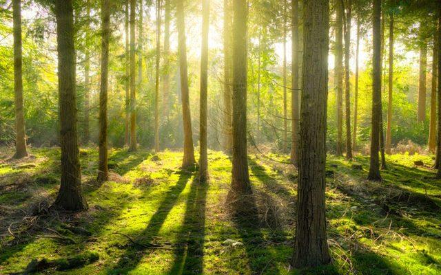 imprenta ecologica vigo